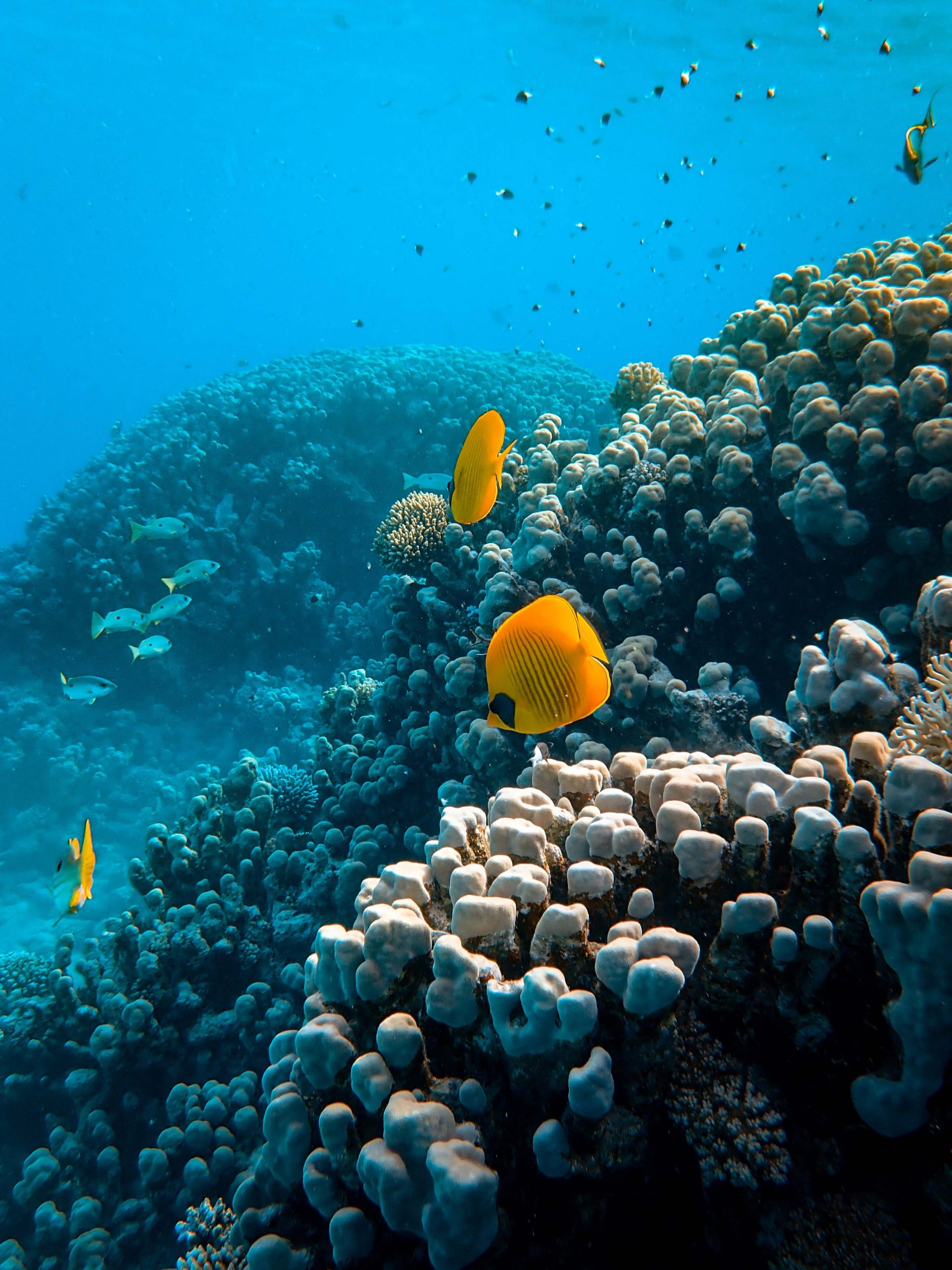 fish swimming coral reef